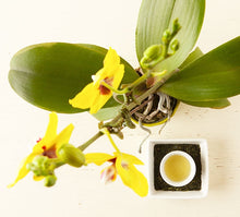 Load image into Gallery viewer, Japanese Orchid Tea and Flower