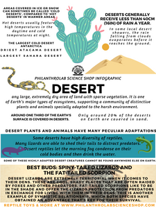 Hip Habitats: The Desert