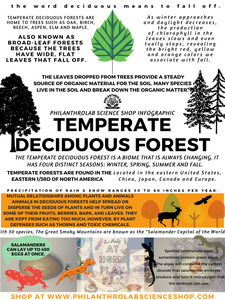 Hip Habitats: Temperate Deciduous Forest