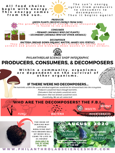 Power of Plants: Producers, Consumers, and Decomposers