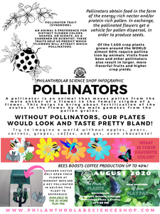 Power of Plants: Pollinators