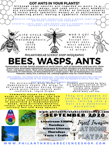 Insect Invasion: Ants, Bees, and Wasps