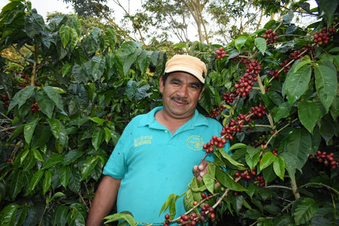 Abel Giron Pacamara Natural Triple Coffee