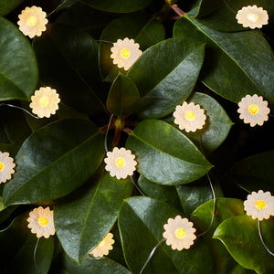 20 Daisy Outdoor Micro Fairy Lights
