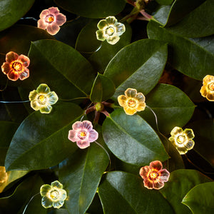 20 Multi Coloured Rose Micro Fairy Lights