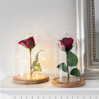 Firefly Golden Glow Bell Jar Bundle