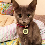 Straight Outta Rescue - Pet ID Tag