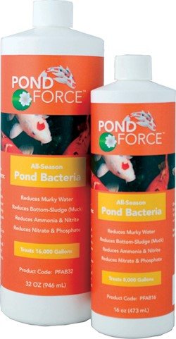 All Season Pond Bacteria 32oz