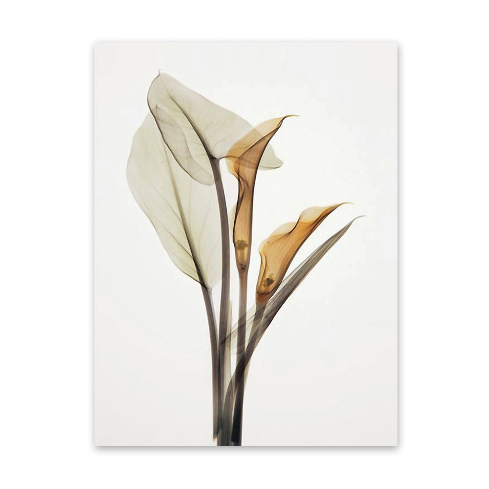 W005 Calla Lily Unframed Art Wall Canvas Prints for Home Decorations