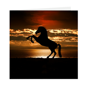 "5"" Square Dancing Horse Blank Greeting Cards (Pack of 1, 10 or 25)"