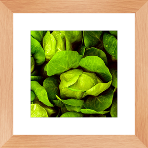 Lovely 10 X 10 Inch  Lettuce Leafy Greens Matted and Framed Print