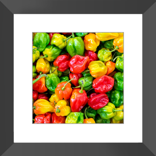 10 x 10 Inch Colorful Red, Green and Yellow Pepper Framed and Matted Print