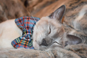 Anderson Ancient Tartan XS Small Dog / Cat Bow Tie - Luxury Highland Wool Pet Couture