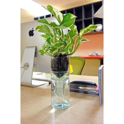 Self Watering Planter-Refresh Glass