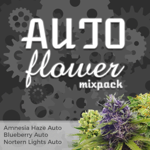 Autoflower Mixpack - Los Angeles Cannabis Club