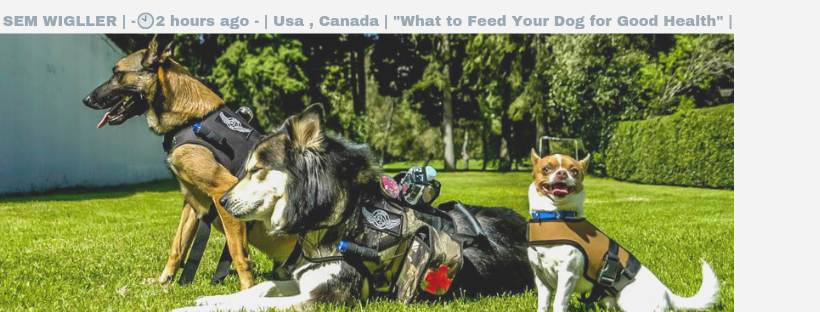 """What to Feed Your Dog for Good Health"" 