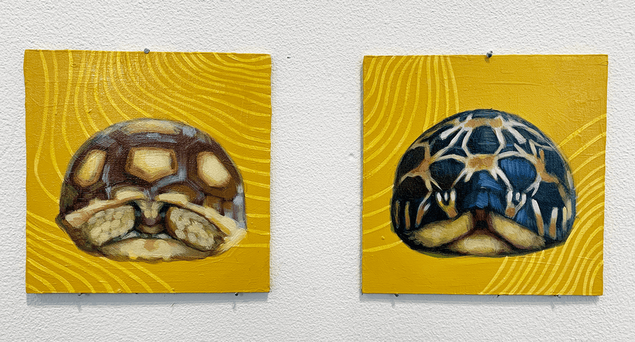 ORLUart's paintings of turtles