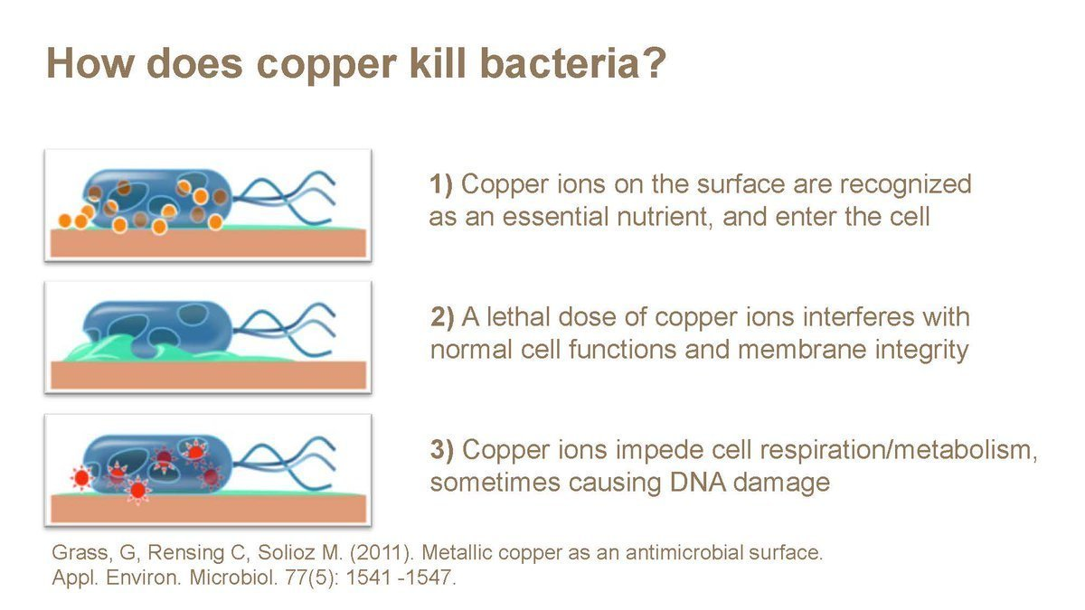 How Does Copper Kill Bacteria?