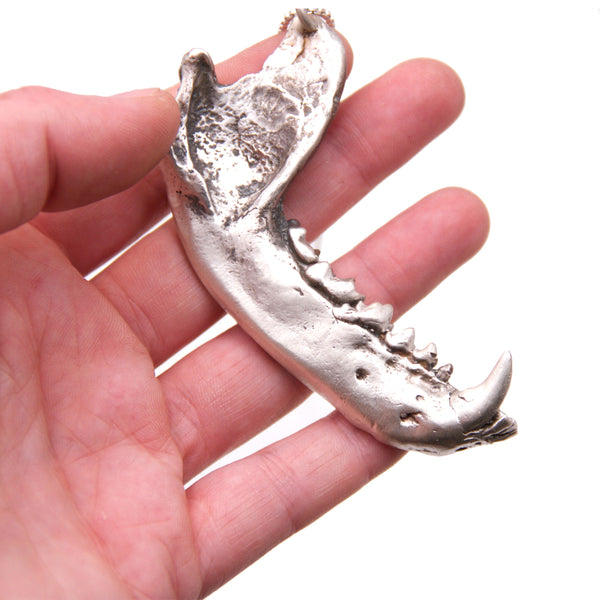 Raccoon Jaw Pendant
