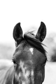 Harlow the Horse Photographic Print