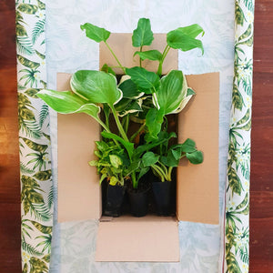Box Of 8 Mixed House Plants - PlantsToday