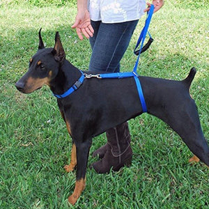 Instant dog trainer leash - Redbovi.com