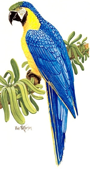 Blue Gold McCaw Cross Stitch Pattern