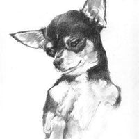 Charming Chihuahua Cross Stitch Pattern