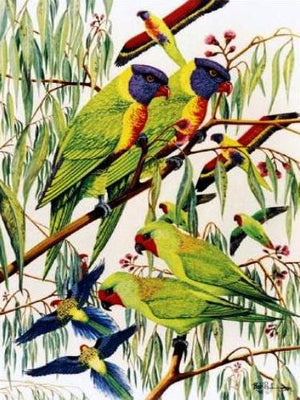 Rainbow Larakeets Cross Stitch Pattern