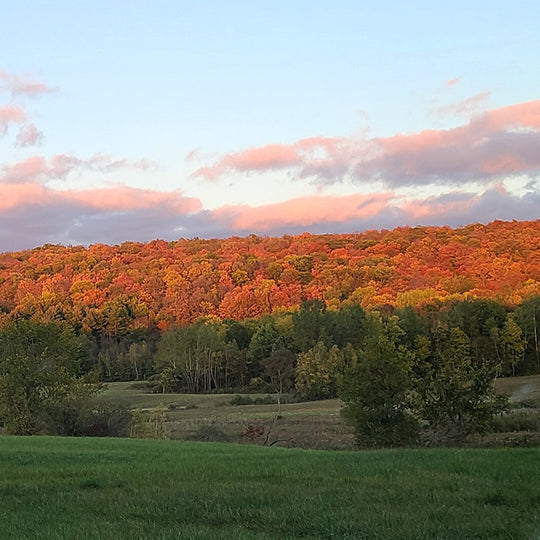 Enjoy reading our blog about the fall foliage on the Carman Brook Farm.