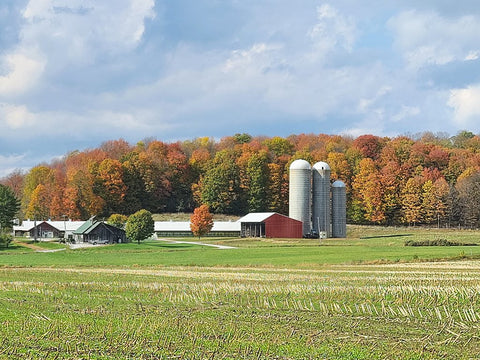 View from across the road of the Carman Brook Farm highlighting the fall foliage in the maple trees behind the buildings.