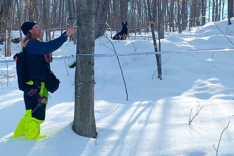 Levon tapping a tree to prepare for the 2021 maple syrup production year.