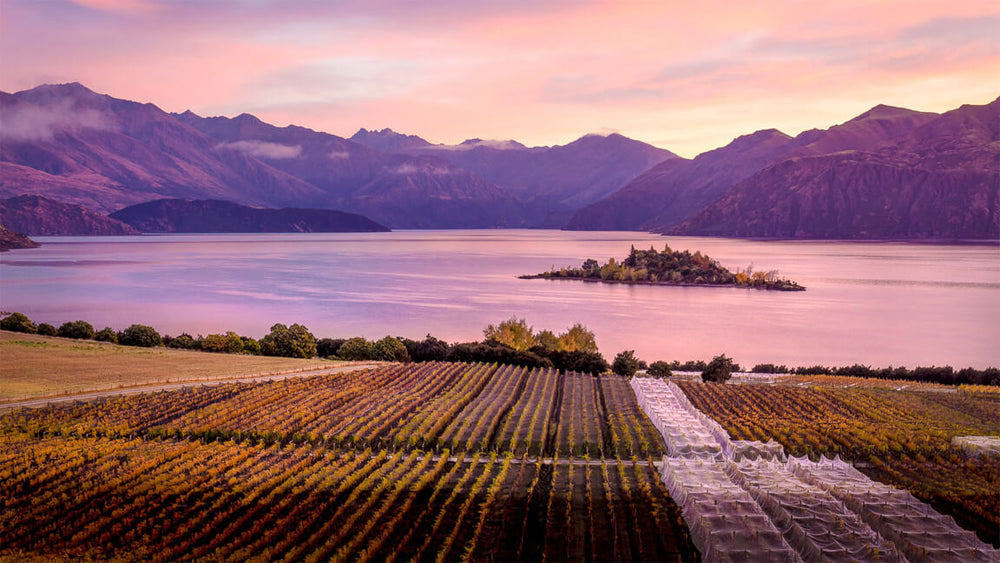 Rippon Vineyard : 2017 Releases