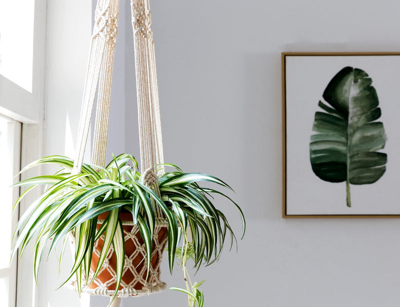 Macrame Cotton Plant Hanger Basket