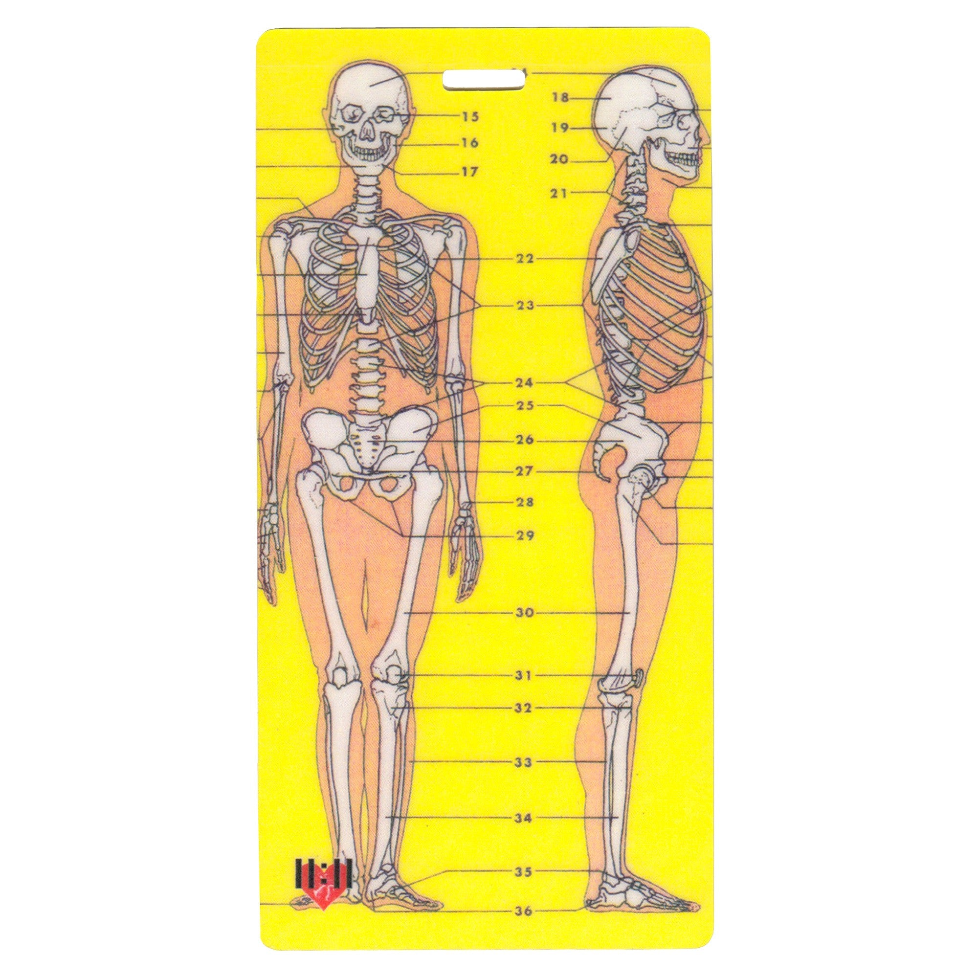 Skeleton Anatomy Luggage Bag Tag Set - 2 pc, Large by 11:11 Enterprises