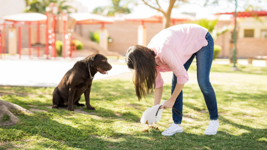 What Does Your Dog's Poop Tell You?