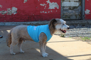 [Premium Quality Unique Dog Dresses & Apparel Online]-Pawtique Pet Boutique