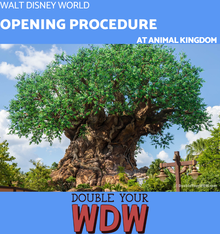 Animal kingdom opening procedure