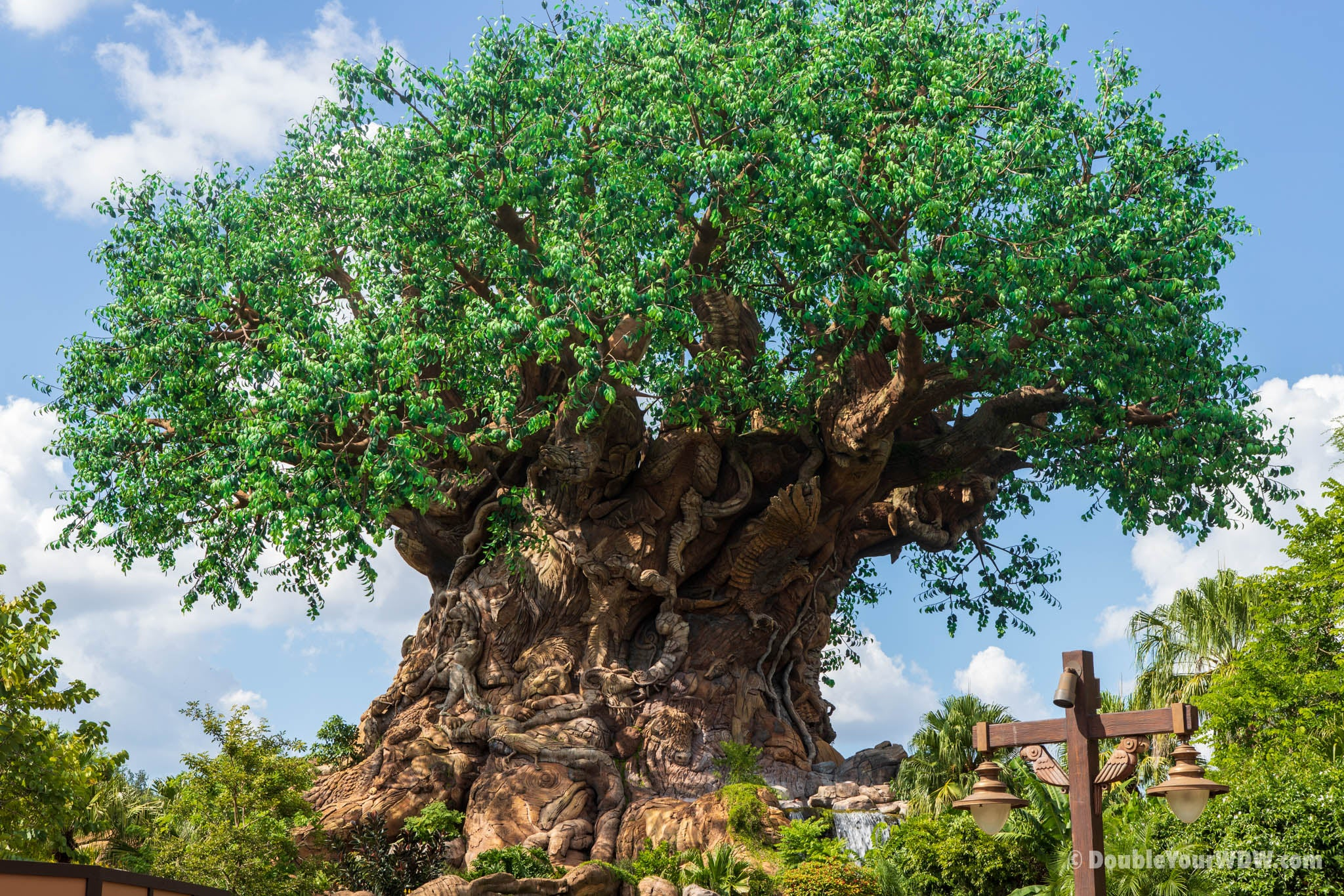 The Tree of Life Animal Kingdom