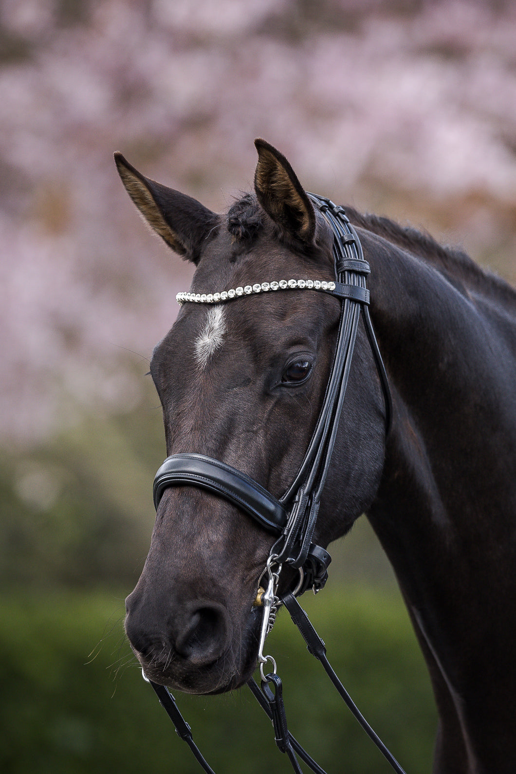 CIRCE - full rolled double bridle