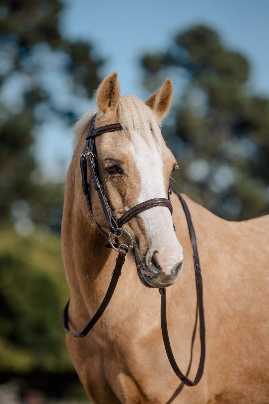 CAVESSON BROWN SNAFFLE