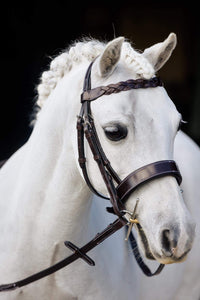 Hunter bridle small pony