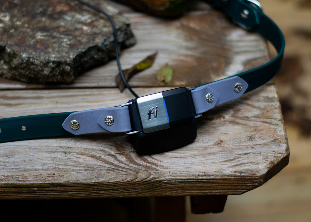 "Lakeside 1"" Chain Martingale Collar For Fi GPS Trackers"