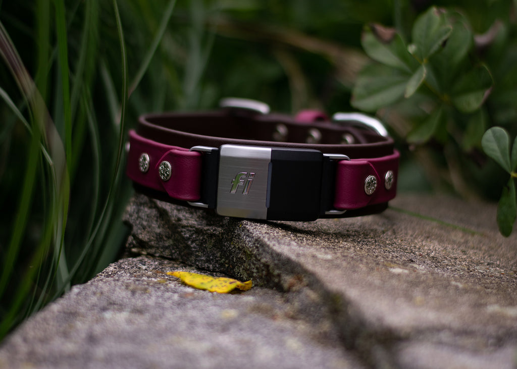 "Lakeside 1.5"" Buckle Collar For Fi GPS Trackers"