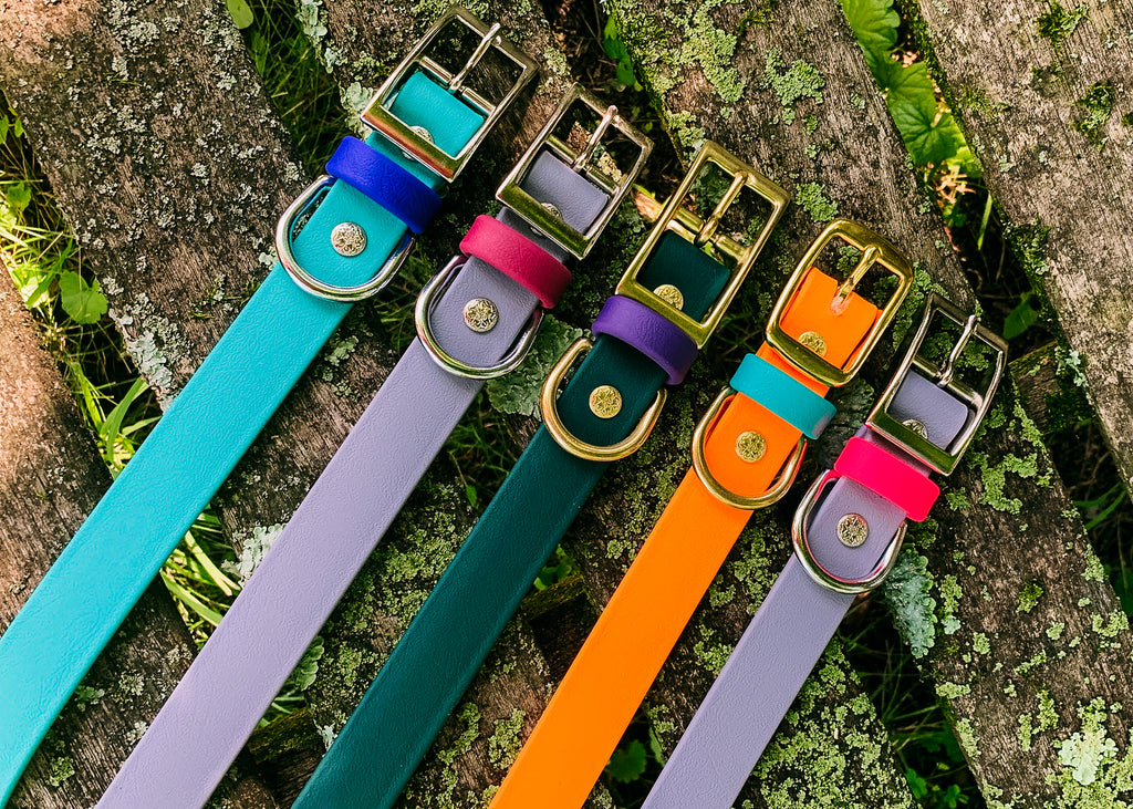 Catalina BioThane® Buckle Dog Collars