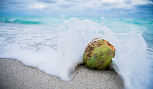 Green Coconut on Sandy Beach with White Waves Crashing Around it
