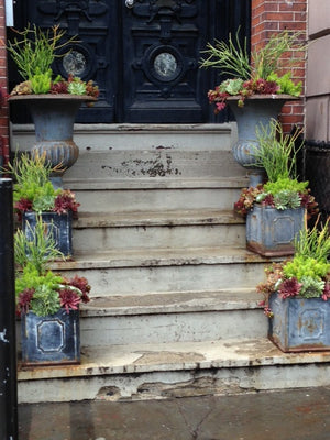 Potted Plants Stoop Garden on Tremont St Boston