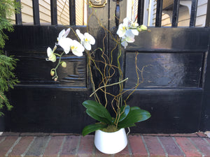 Orchid with Natural Curly Willow for Retail Business