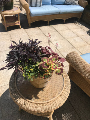 Summer Container Garden with Sweet Potato Vine