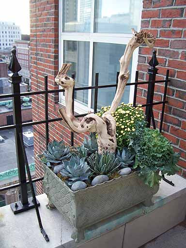 Driftwood in Rooftop Container with Kale, Succulents, and Stones